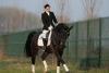 Centro equestre: DressyHorses