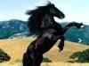Centro equestre: cavalli liberi