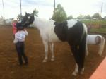 Moons R Eternal - Paint horse (10 anni)