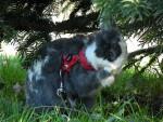 Coniglio nano Twiny 2 - ( (4 anni))