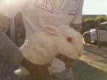 Coniglio conejita - ( (7 mesi))