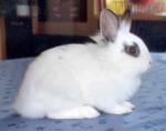 Coniglio schweppes - ()